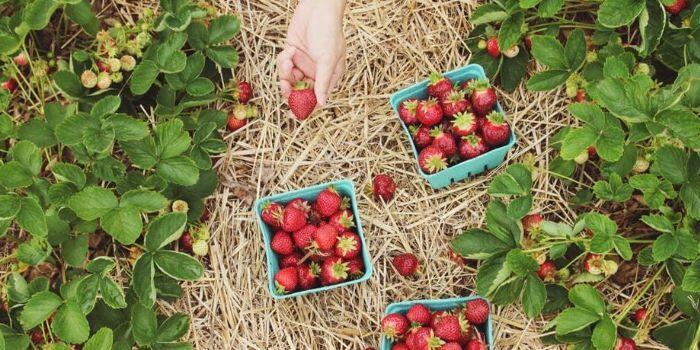 Meyve Bahçeleri için Devlet Desteği 2020 ve Banka Kredileri