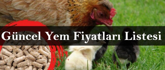 Güncel Tavuk Yemi Fiyatları 2021 Listesi (Et, Yumurta, Civciv)
