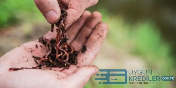 Solucan Gübresi Fiyatı: Kırmızı Kaliforniya Solucanı Üretimi ve Sıvı Solucan Gübresi